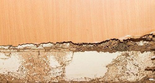 Termite Infestation Prevention, Inspection & Treatment Tips in Tulsa OK