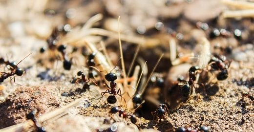 Fun & Amazing Facts About the Ant