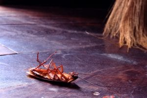 Eco Friendly Pest Control Solutions in Broken Arrow OK