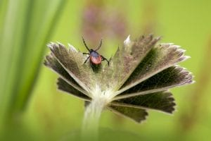 Prevention & How to Get Rid of Infestations of Ticks in Fort Worth, TX