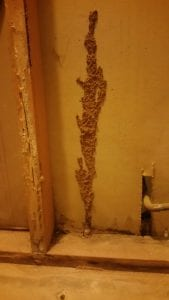Identifying Termite Tubes; Signs of Termite Infestation