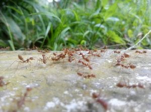 Ants Invade Oklahoma Homes and Businesses