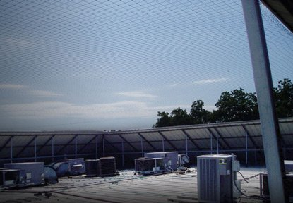 roof with bird netting barriers installed.
