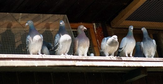 Protecting Your Structure From Pest Birds