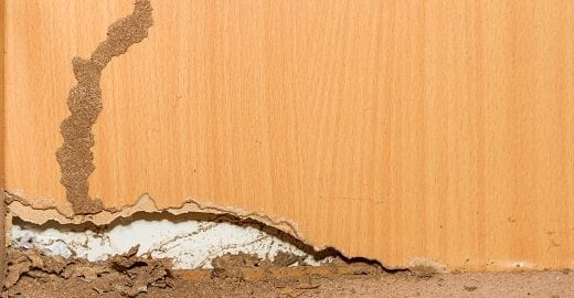 Termites Damage Homes and Businesses; Termite Detection and Control in Muskogee, OK