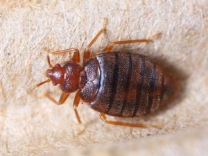 Know the Signs of Bed Bugs in Oklahoma and Texas