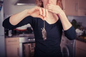 Protect Your Family and Customers from Rodent-Borne Diseases