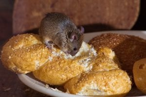 How Do Rodents Affect Your Business?
