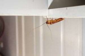 3 Pests That Can Harm Your Business