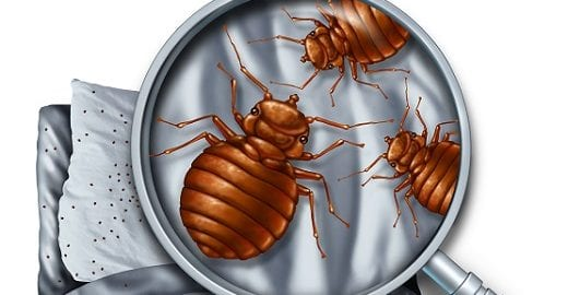 How To Identify a Bed Bug Infestation