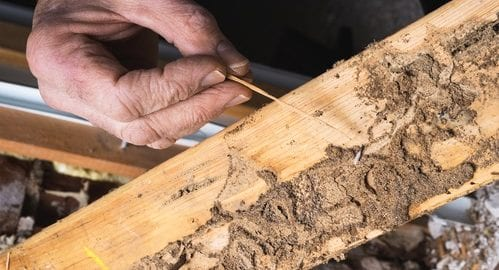 Termites Cause Damage Year-Round