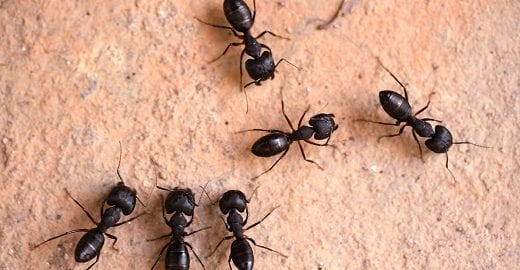 Protect Your Structure From Unwelcome Ants