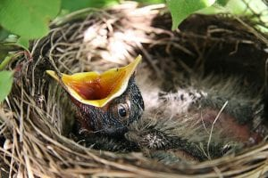 When Should You Remove Bird Nests?