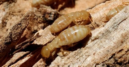 3 Things Besides Wood That Attract Termites