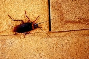 Spring Into Action to Prevent Cockroach Infestation