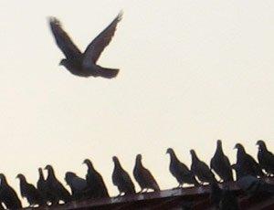birdControlImage