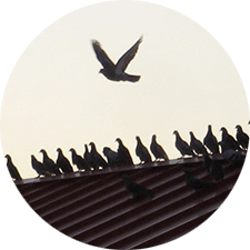 Photo of Birds on a roof top