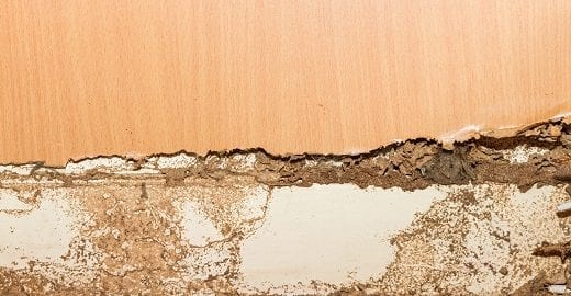 3 Reasons to Get A Termite Inspection