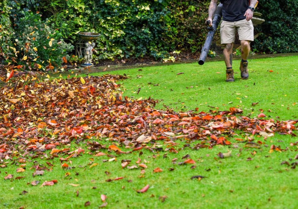 A man using a leaf blower machine to clear autumn leaves from a garden during fall