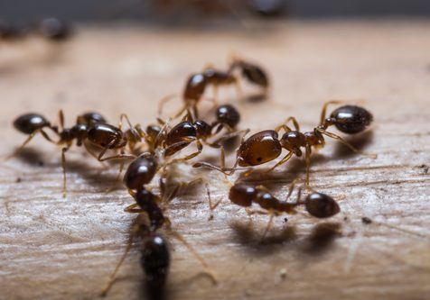 What Brings Ants Inside Your Ft. Worth Home?; Ant Control and Prevention in Ft. Worth TX