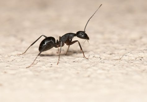 3 Signs You Have a Carpenter Ant Problem