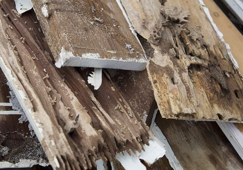 3 Destructive Pests That Could Be Hiding In Your Structure